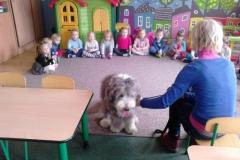 Mój Przyjaciel Pies - fundacja Dogtor