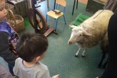 Od owcy do kłębka gr II